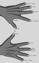 fiona_hands